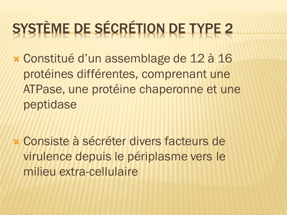 Système de sécrétion de type 2
