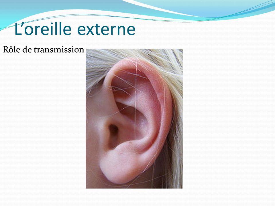 L'oreille externe Rôle de transmission
