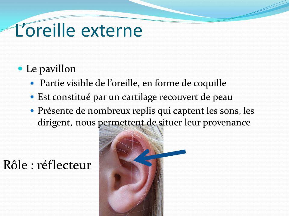 L'oreille externe Rôle : réflecteur Le pavillon