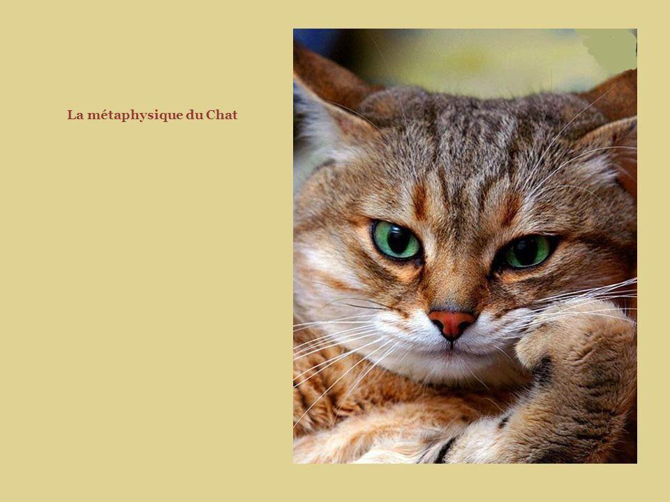 La métaphysique du Chat