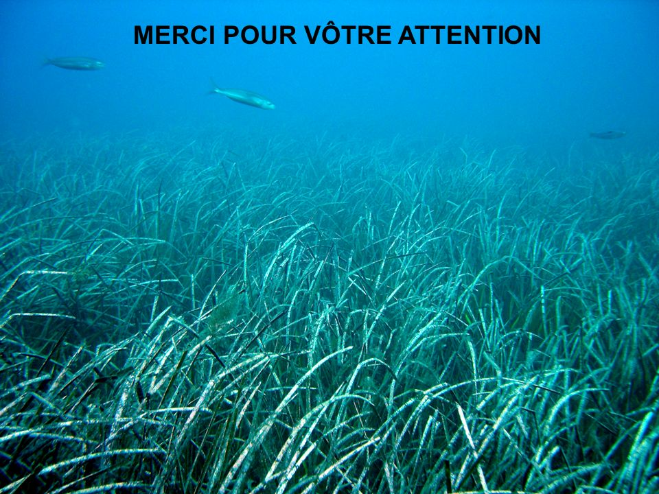 MERCI POUR VÔTRE ATTENTION