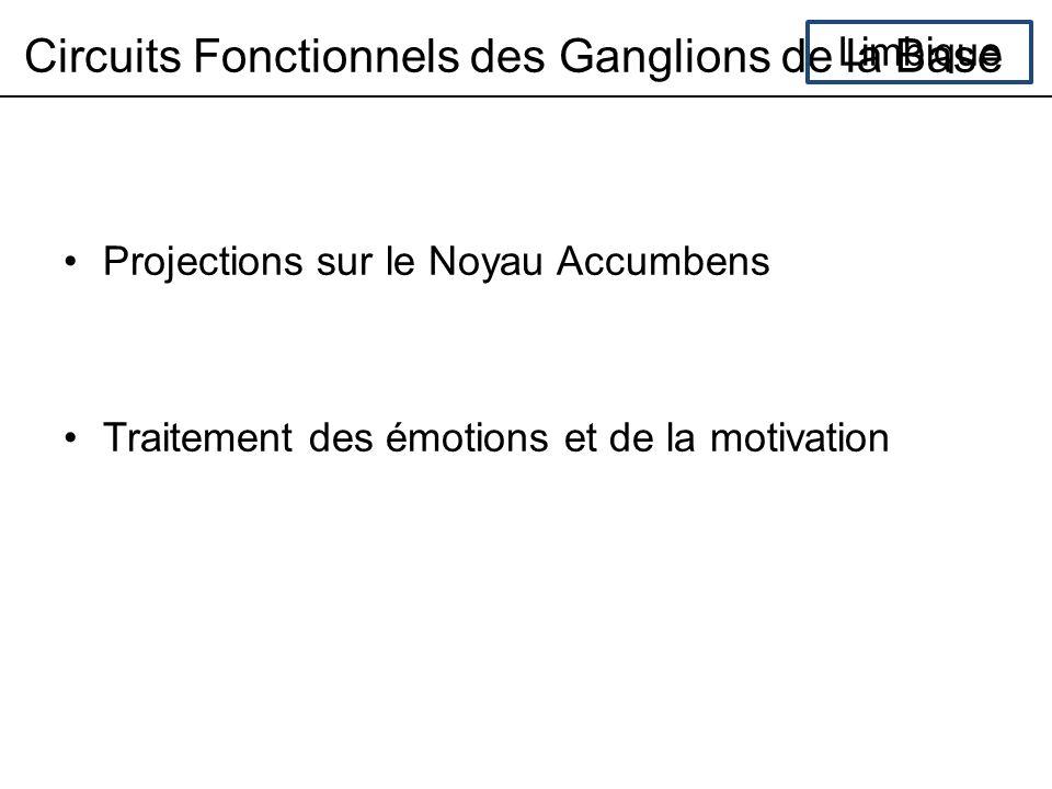 Circuits Fonctionnels des Ganglions de la Base