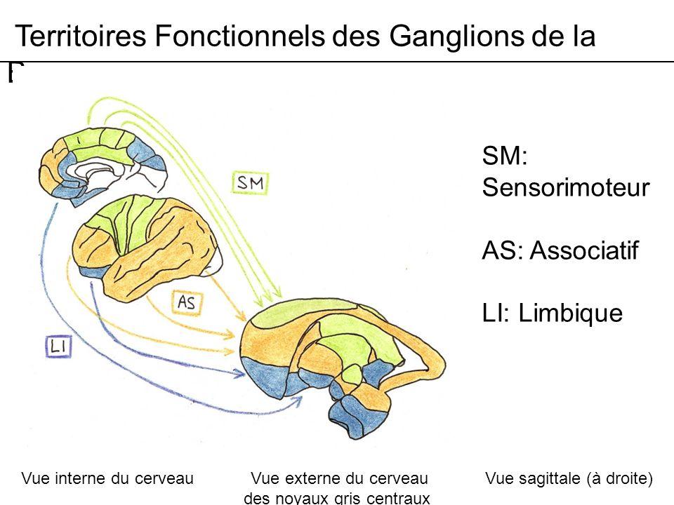 Territoires Fonctionnels des Ganglions de la Base