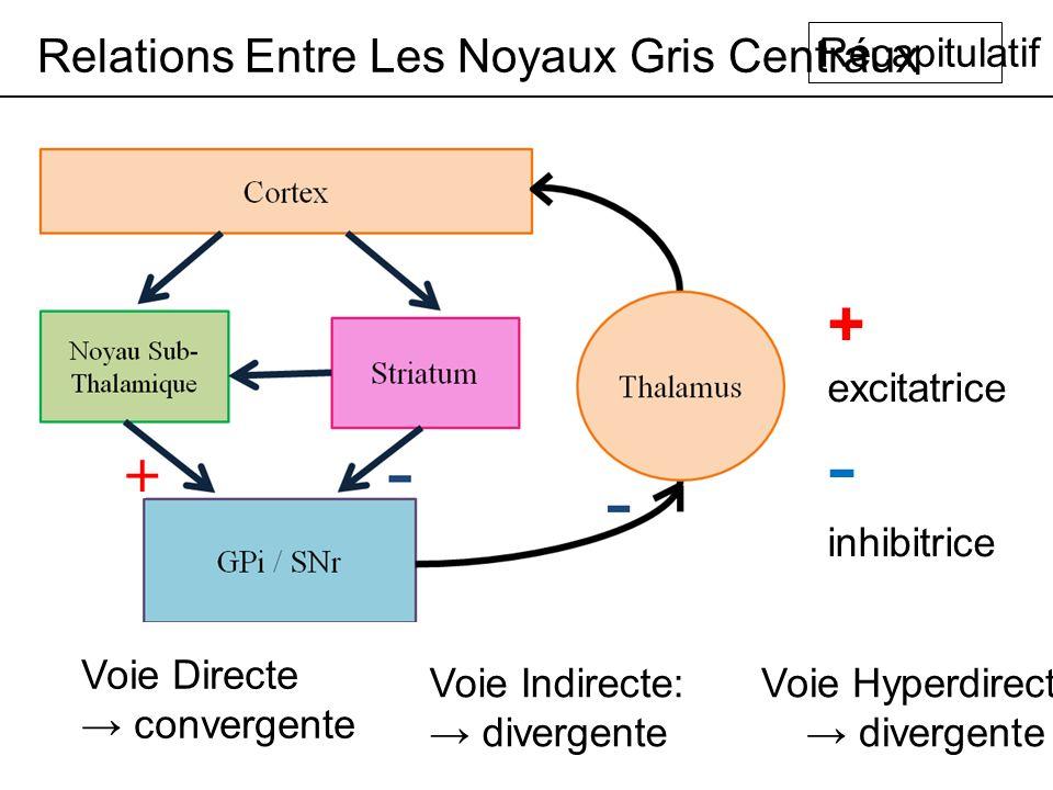 - inhibitrice + excitatrice Relations Entre Les Noyaux Gris Centraux
