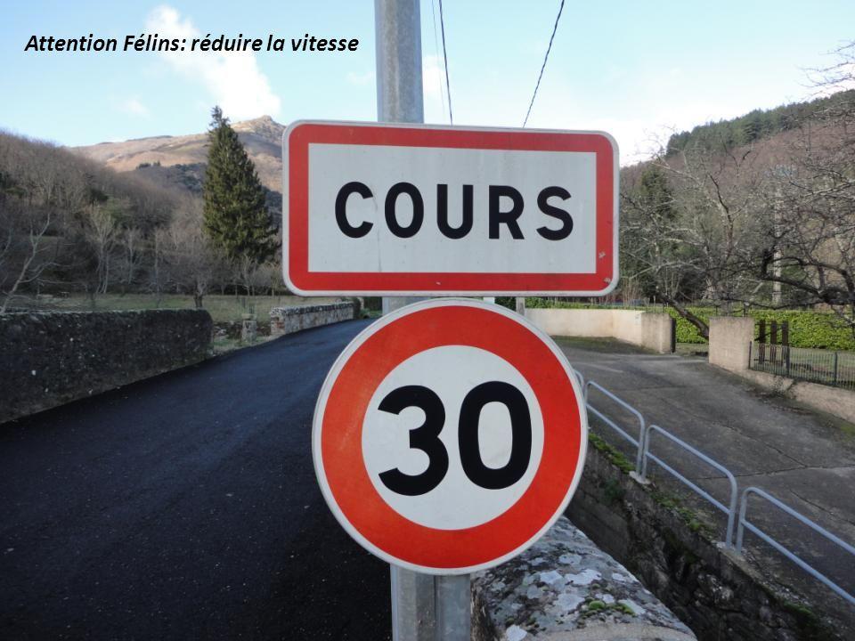Attention Félins: réduire la vitesse