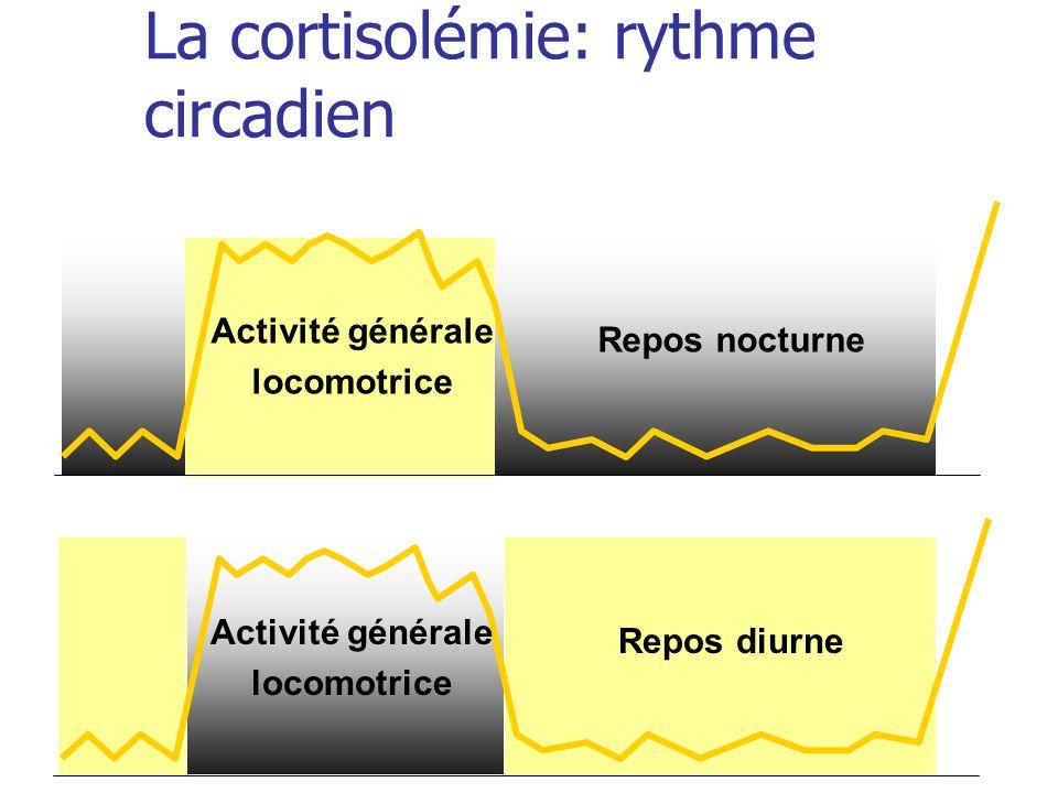 La cortisolémie: rythme circadien