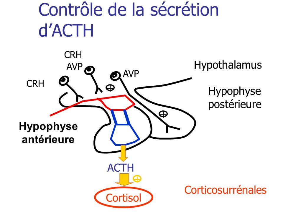Contrôle de la sécrétion d'ACTH