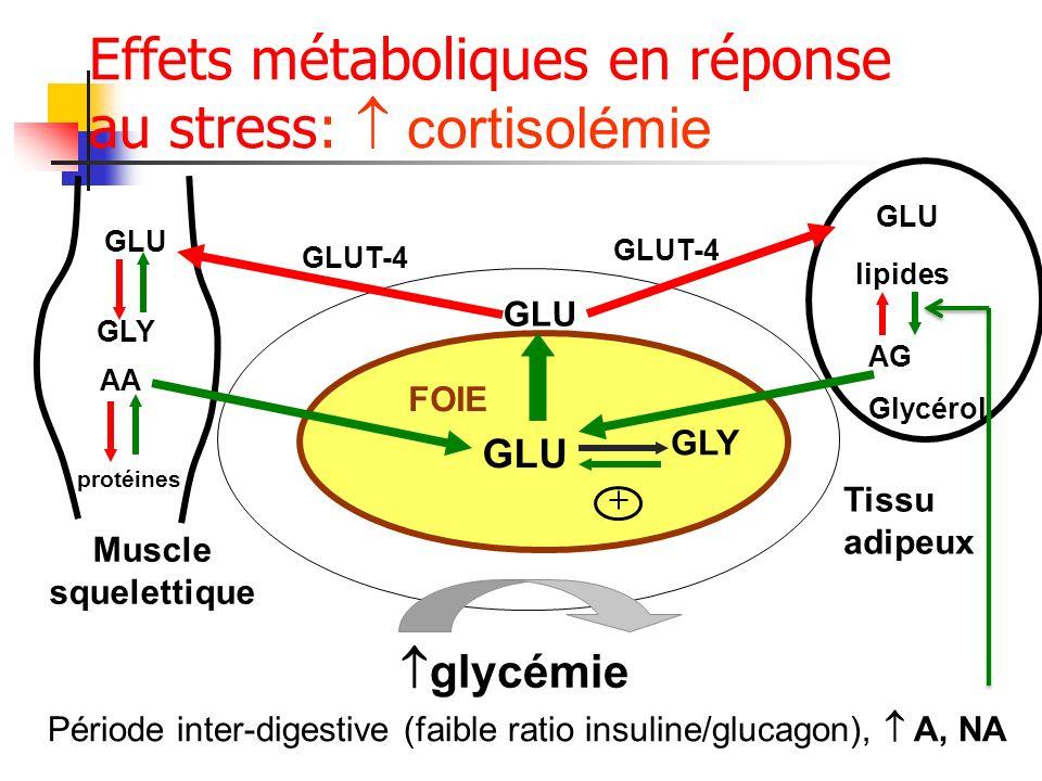 Effets métaboliques en réponse au stress:  cortisolémie