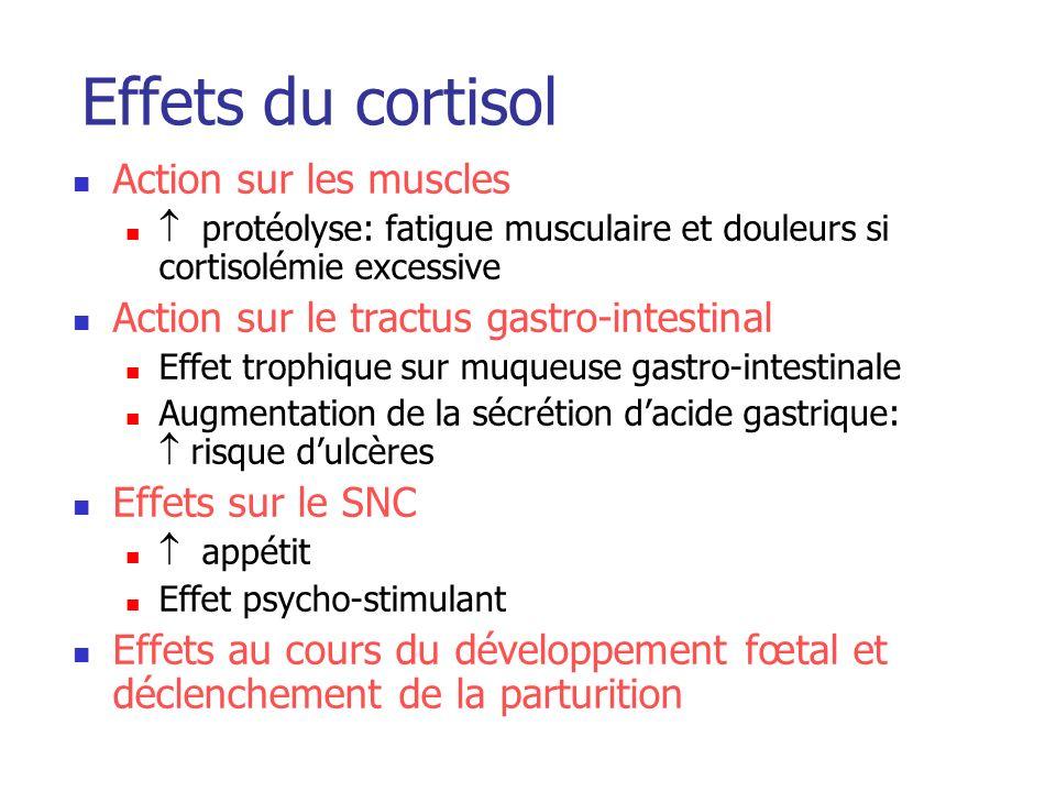 Effets du cortisol Action sur les muscles