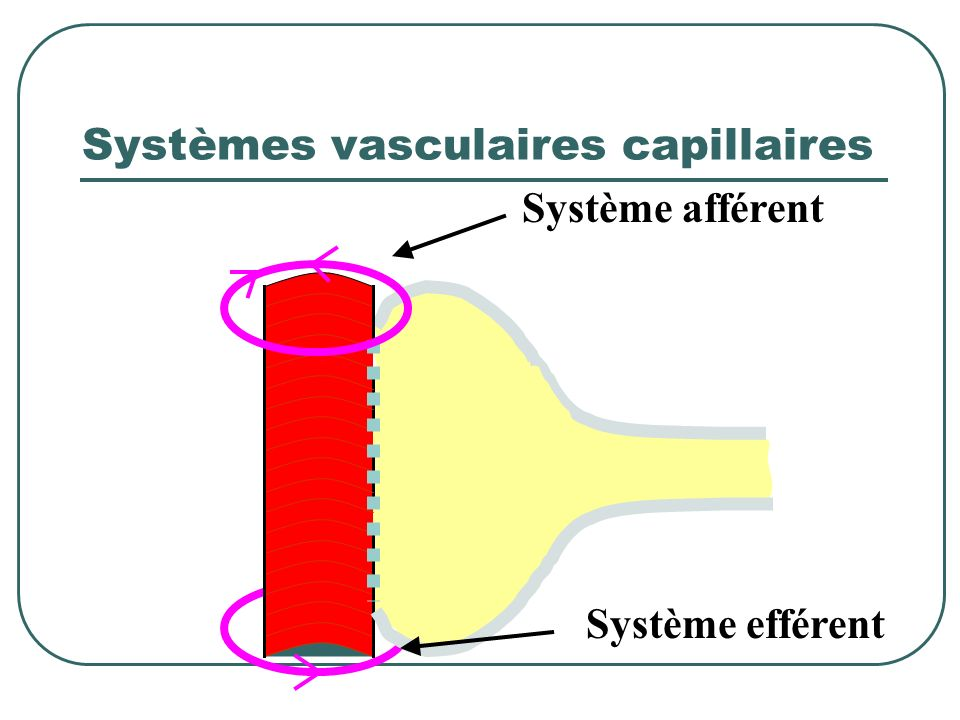 Systèmes vasculaires capillaires
