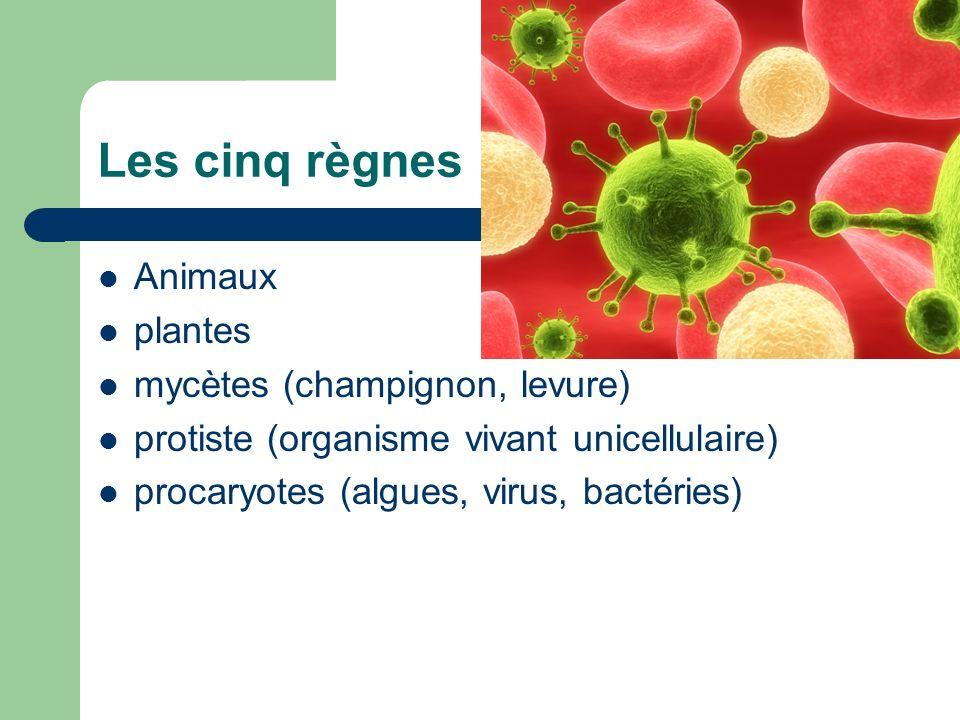 Les cinq règnes Animaux plantes mycètes (champignon, levure)