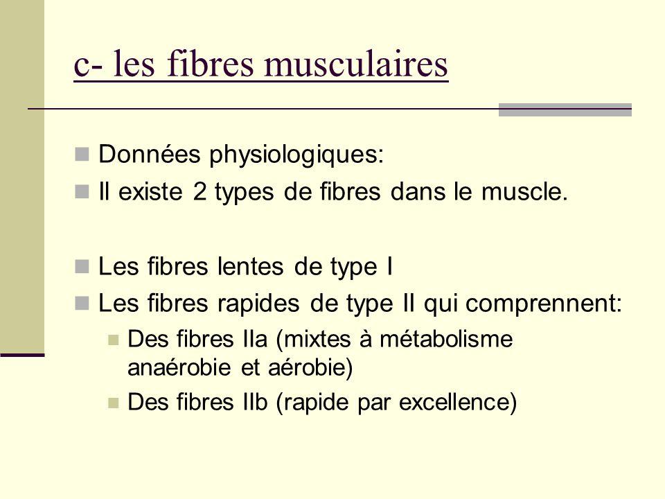 c- les fibres musculaires