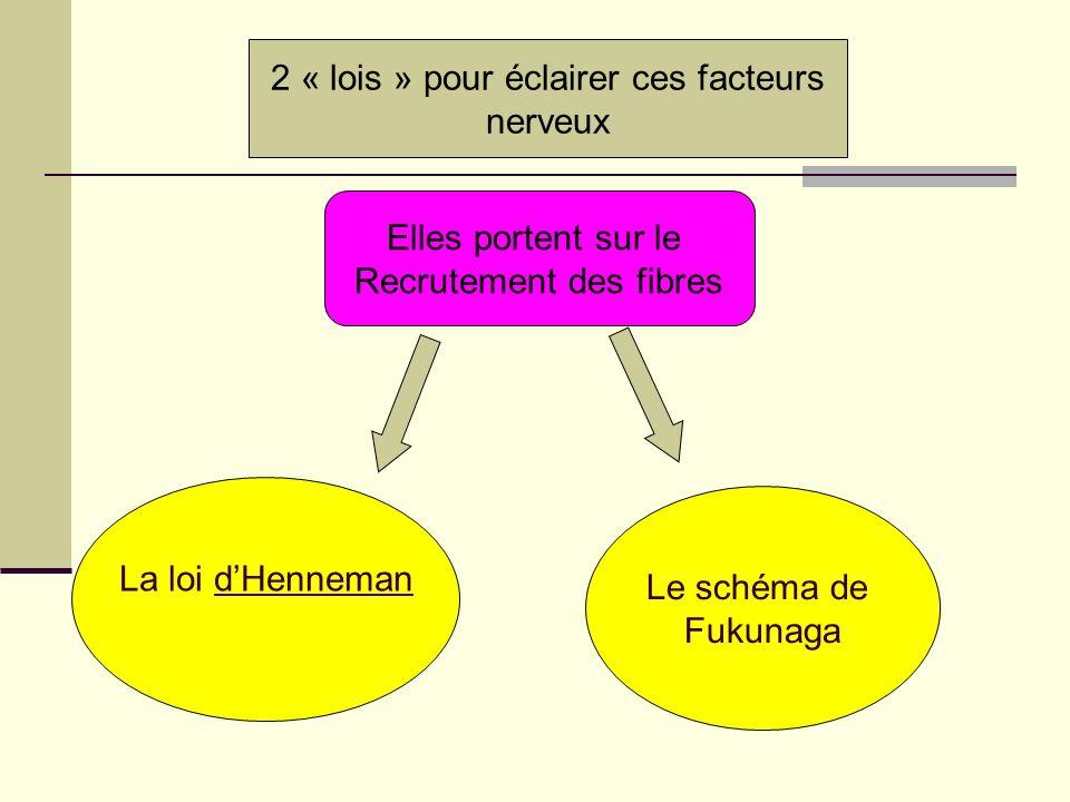 2 « lois » pour éclairer ces facteurs nerveux