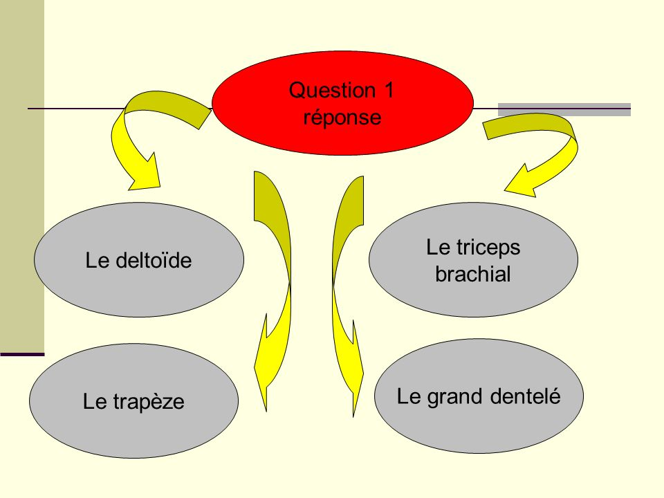 Question 1 réponse Le deltoïde Le triceps brachial Le grand dentelé Le trapèze