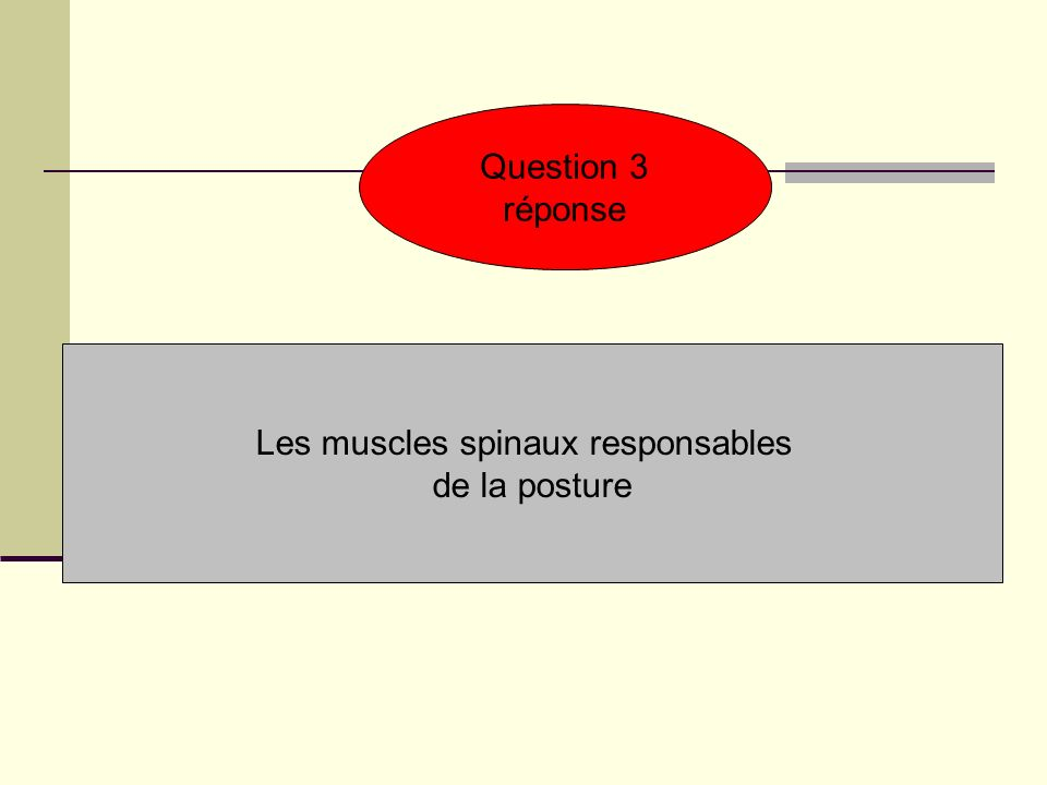 Les muscles spinaux responsables