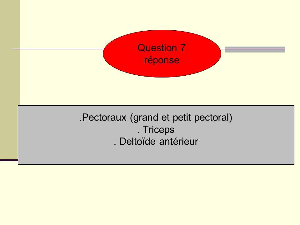 .Pectoraux (grand et petit pectoral)