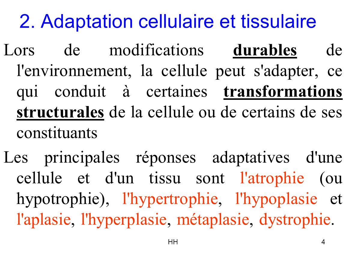 2. Adaptation cellulaire et tissulaire