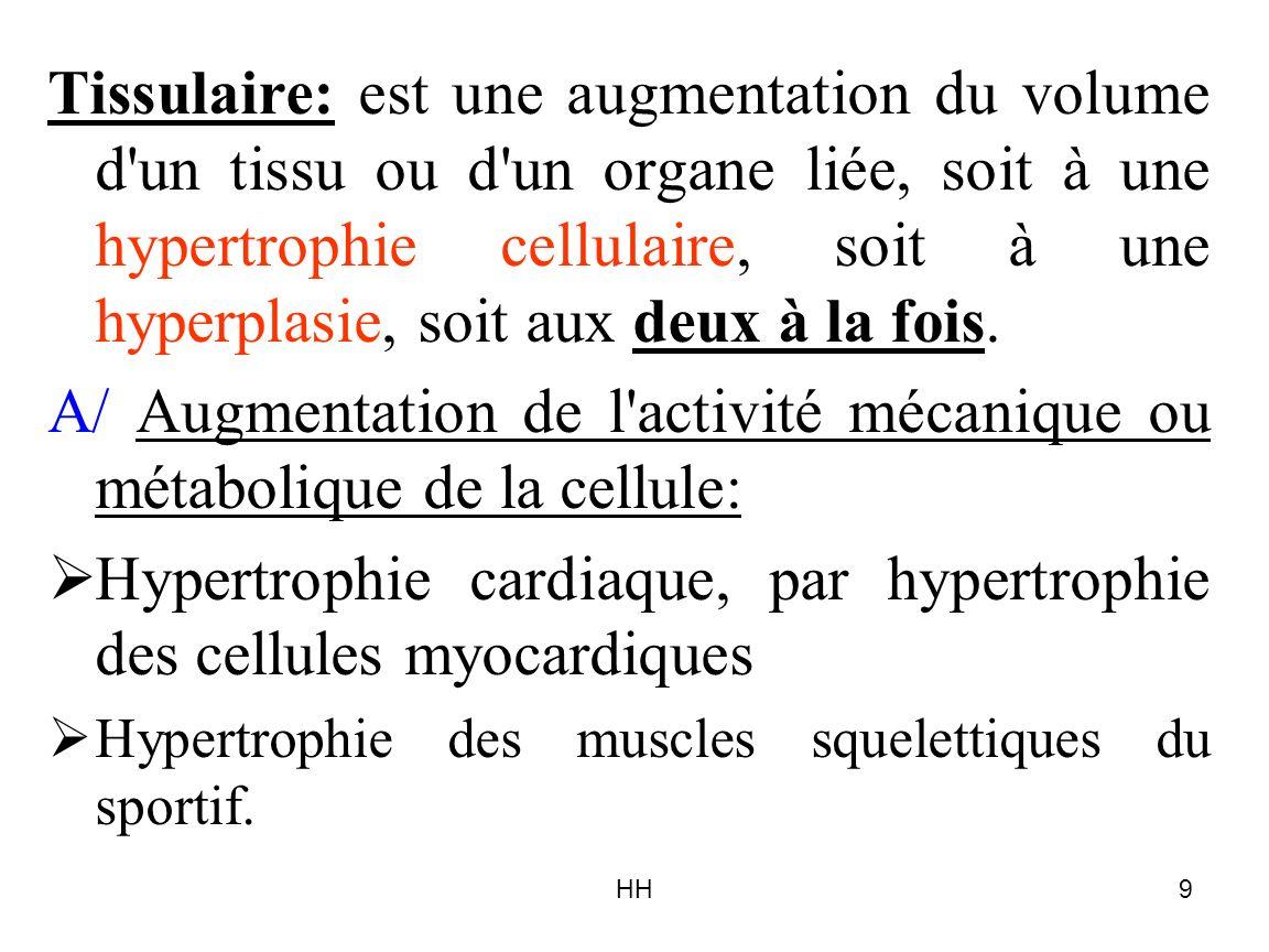 A/ Augmentation de l activité mécanique ou métabolique de la cellule: