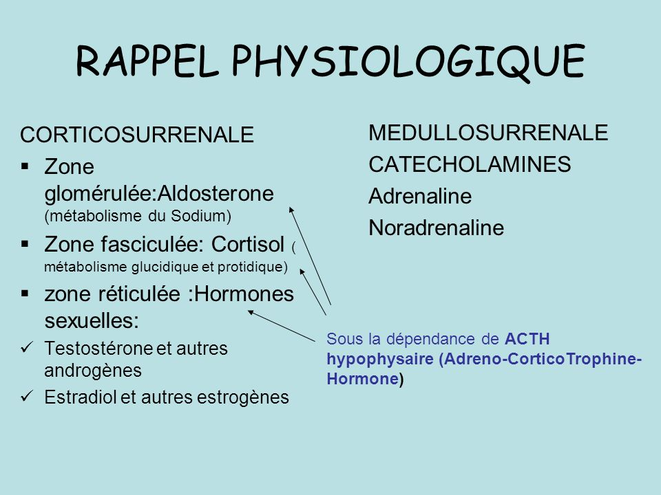 RAPPEL PHYSIOLOGIQUE CORTICOSURRENALE MEDULLOSURRENALE CATECHOLAMINES