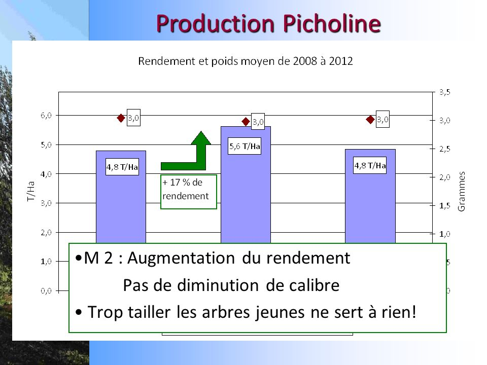 Production Picholine M 2 : Augmentation du rendement