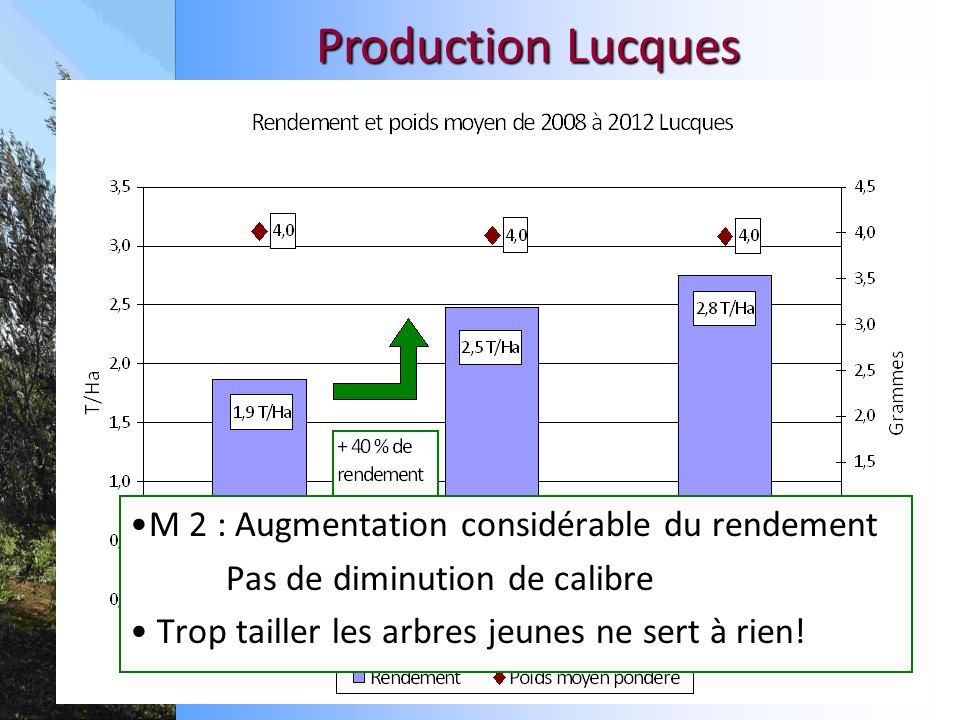 Production Lucques M 2 : Augmentation considérable du rendement