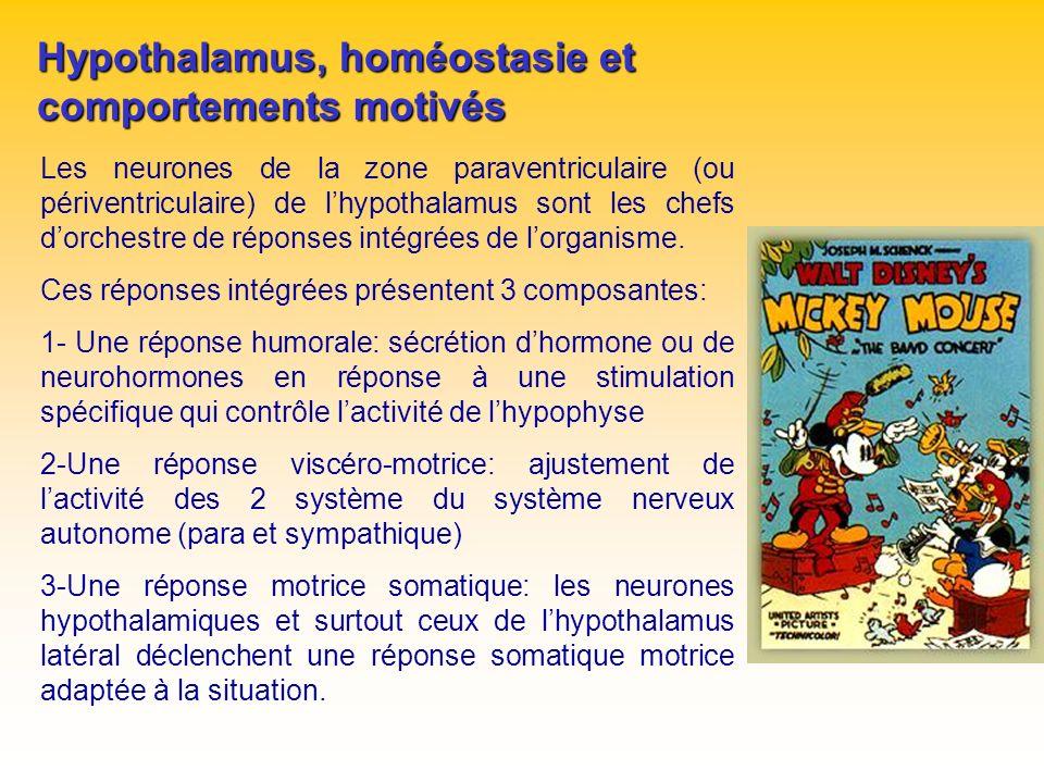 Hypothalamus, homéostasie et comportements motivés