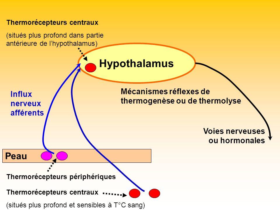 Hypothalamus Peau Mécanismes réflexes de thermogenèse ou de thermolyse