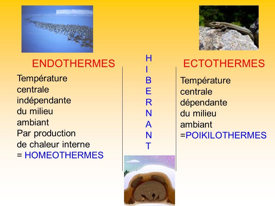 ENDOTHERMES ECTOTHERMES H I B E Température R Température centrale N