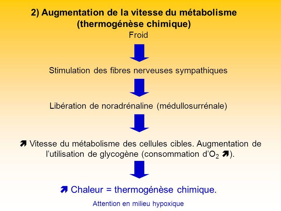 2) Augmentation de la vitesse du métabolisme (thermogénèse chimique)