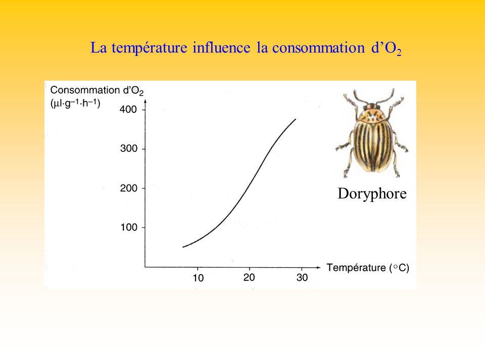 La température influence la consommation d'O2