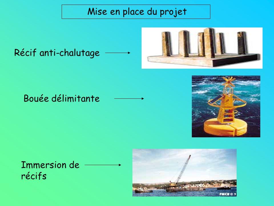Mise en place du projet Récif anti-chalutage Bouée délimitante Immersion de récifs