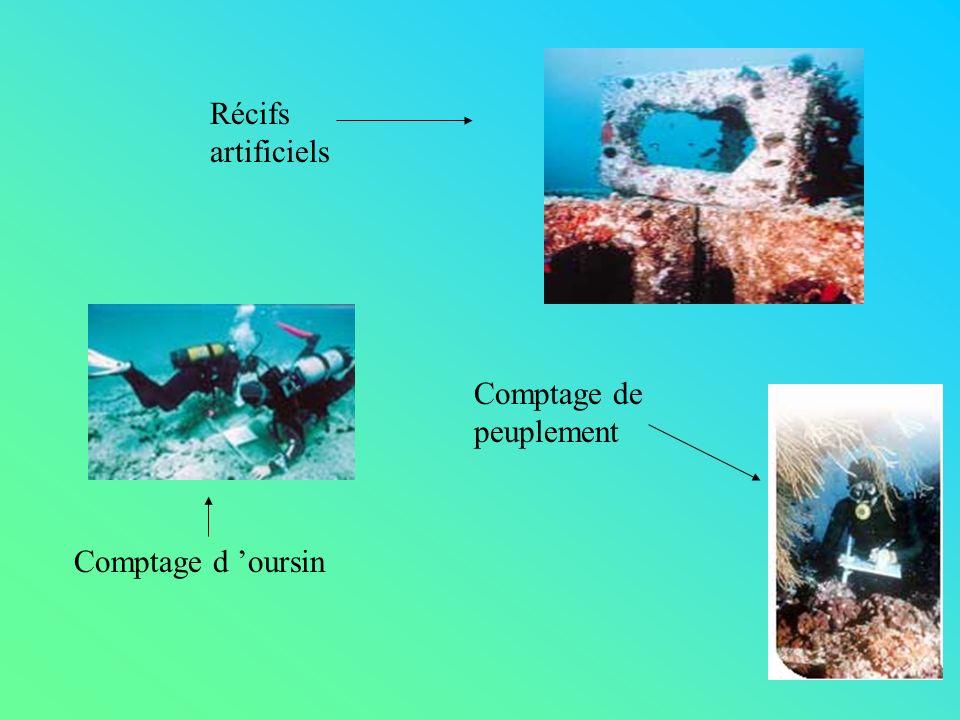 Récifs artificiels Comptage de peuplement Comptage d 'oursin