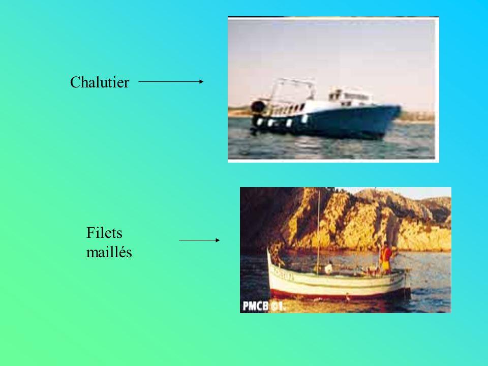 Chalutier Filets maillés