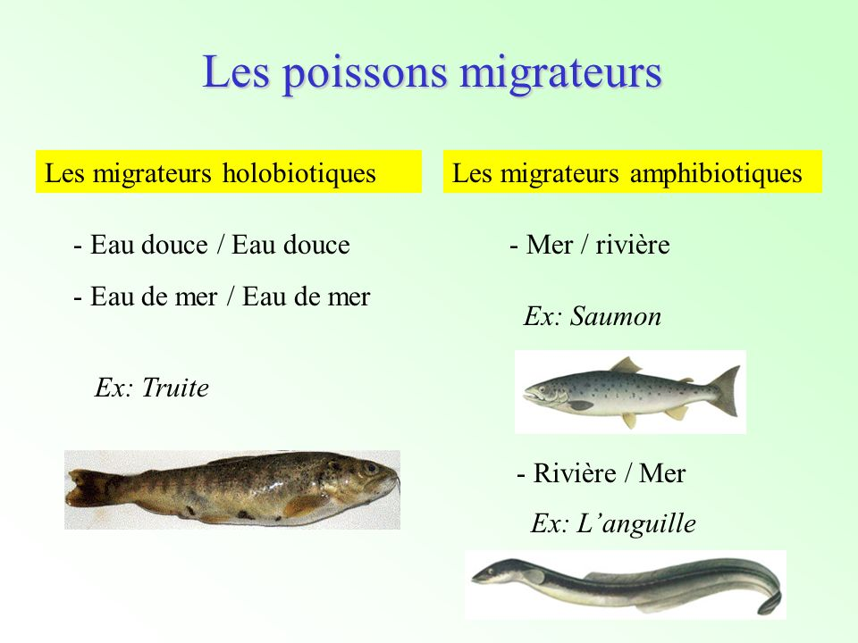 Les poissons migrateurs