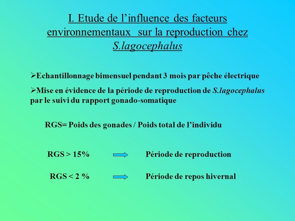 I. Etude de l'influence des facteurs environnementaux sur la reproduction chez S.lagocephalus