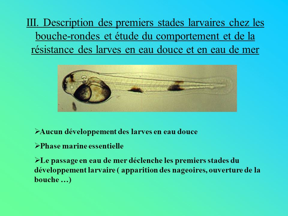 III. Description des premiers stades larvaires chez les bouche-rondes et étude du comportement et de la résistance des larves en eau douce et en eau de mer