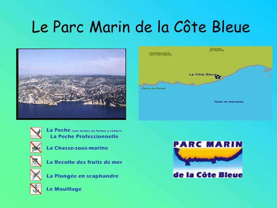 Le Parc Marin de la Côte Bleue