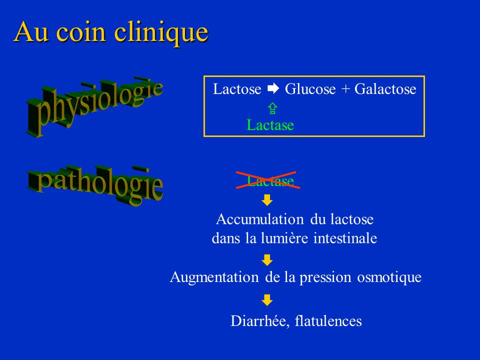 Au coin clinique physiologie pathologie Lactose  Glucose + Galactose