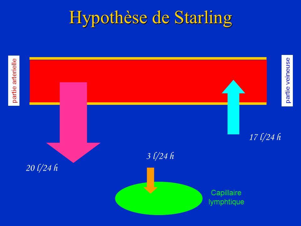 Hypothèse de Starling 17 l/24 h 3 l/24 h 20 l/24 h Capillaire