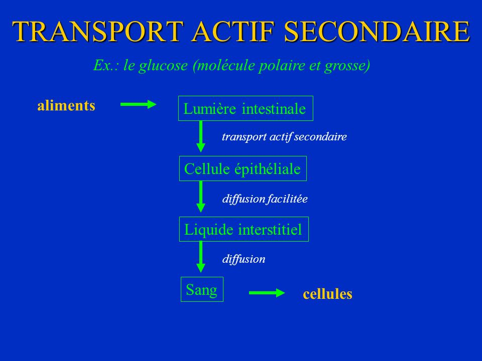 TRANSPORT ACTIF SECONDAIRE