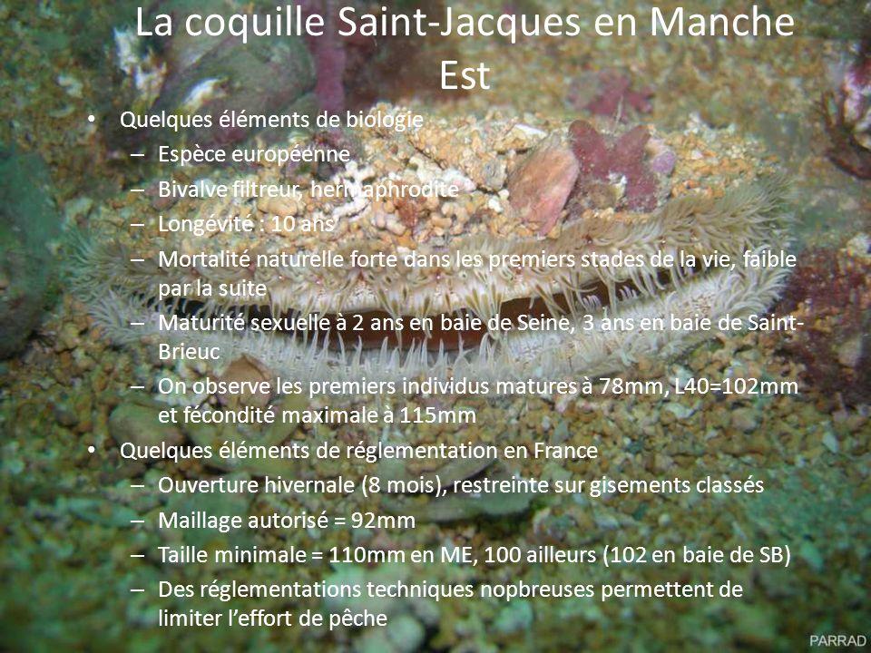 La coquille Saint-Jacques en Manche Est