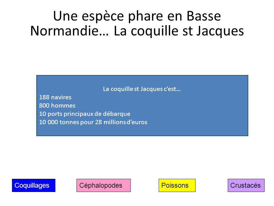 Une espèce phare en Basse Normandie… La coquille st Jacques