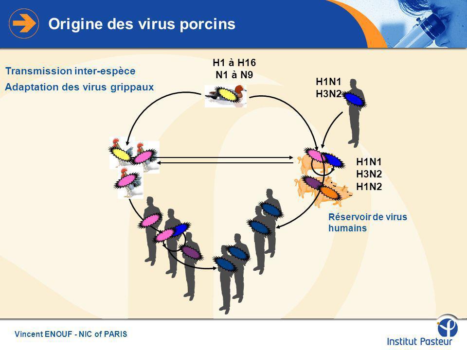 Origine des virus porcins