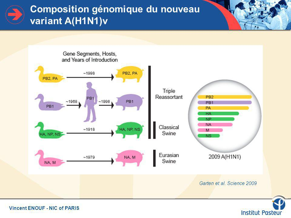 Composition génomique du nouveau variant A(H1N1)v
