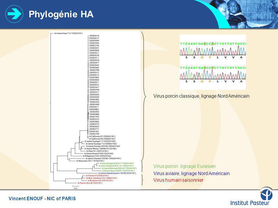 Phylogénie HA Virus porcin classique, lignage Nord Américain