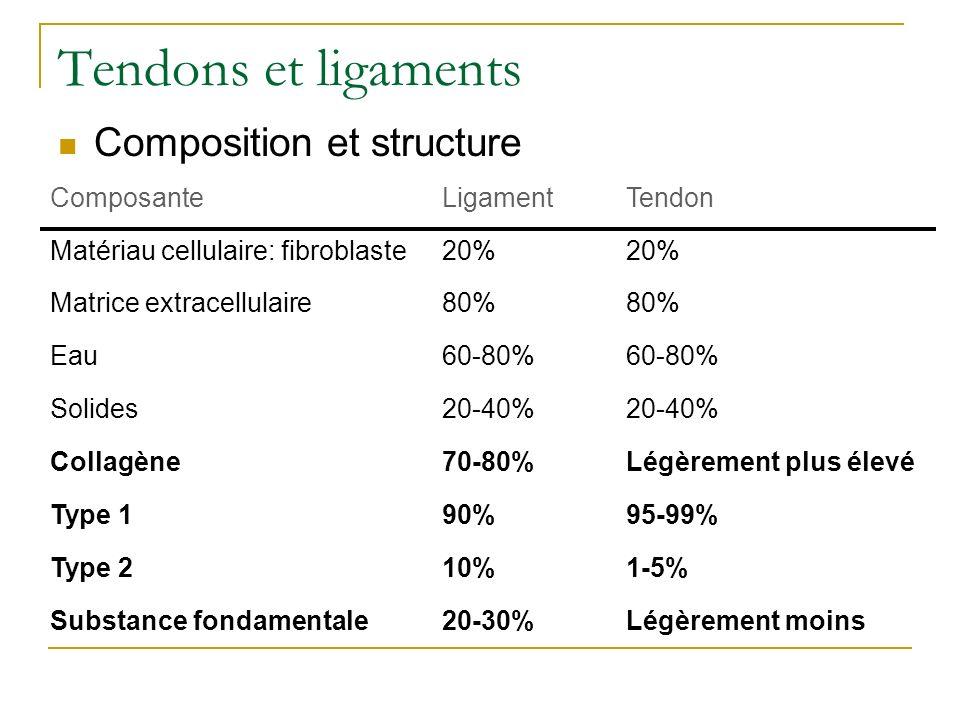 Tendons et ligaments Composition et structure Composante Ligament