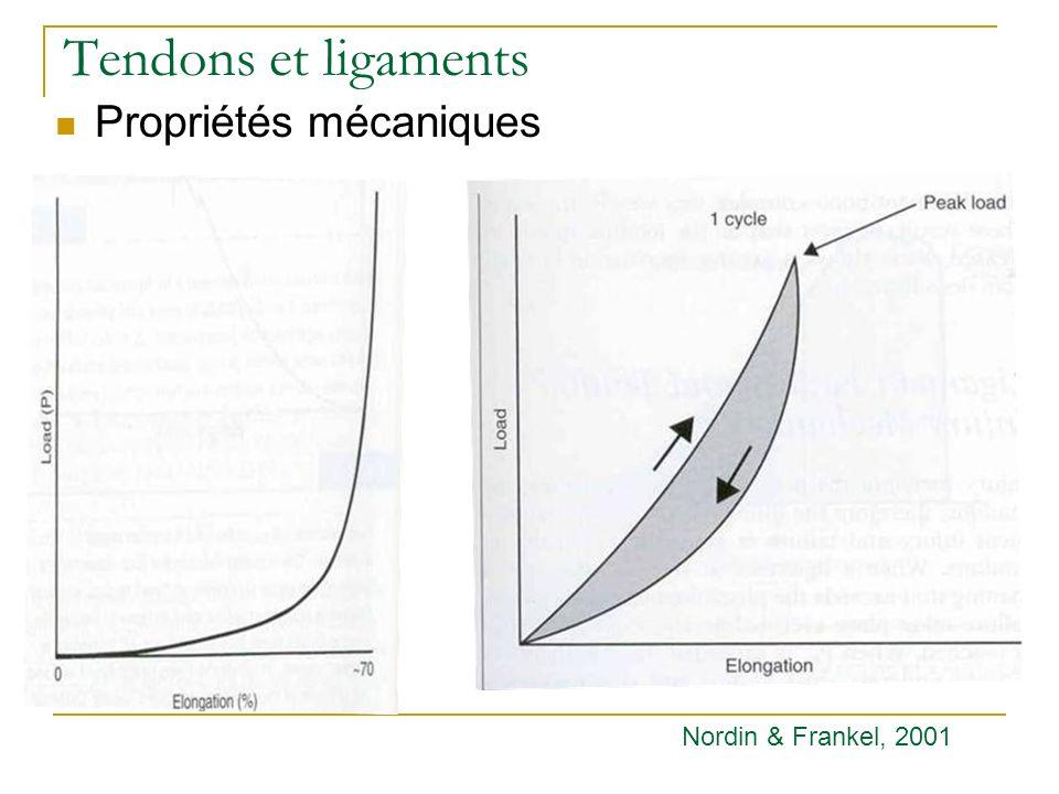 Tendons et ligaments Propriétés mécaniques Nordin & Frankel, 2001