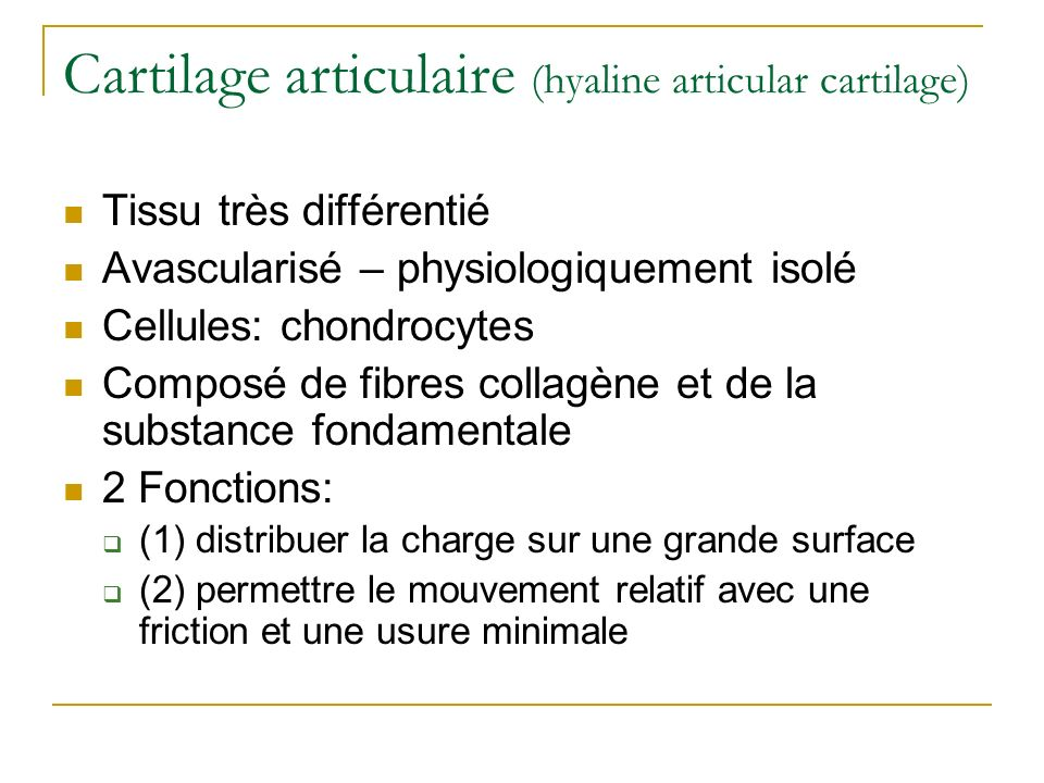 Cartilage articulaire (hyaline articular cartilage)