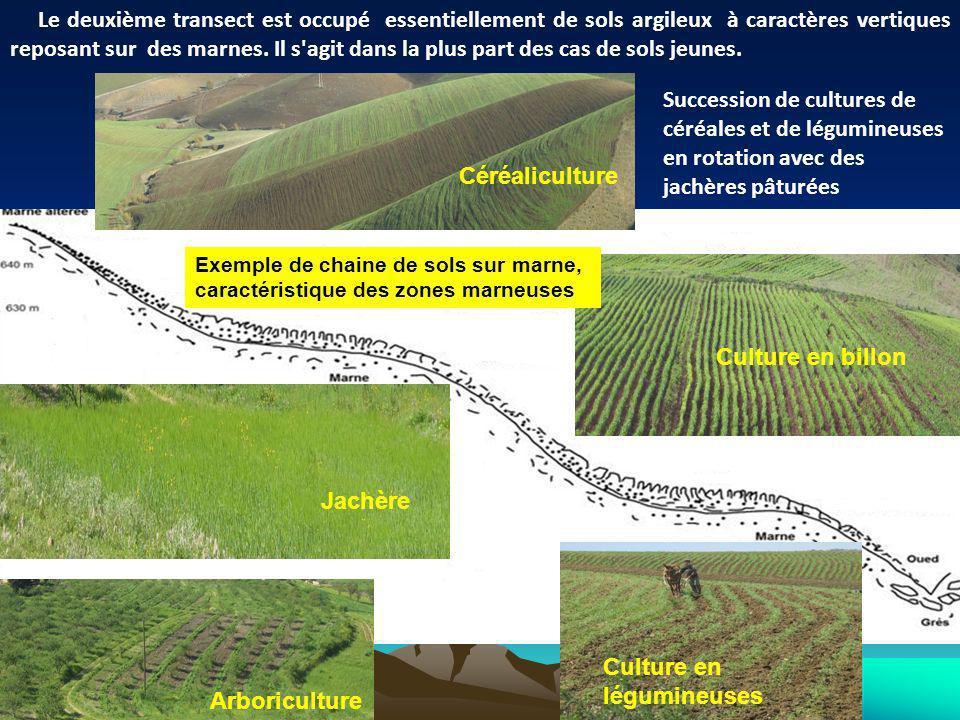 Succession de cultures de céréales et de légumineuses