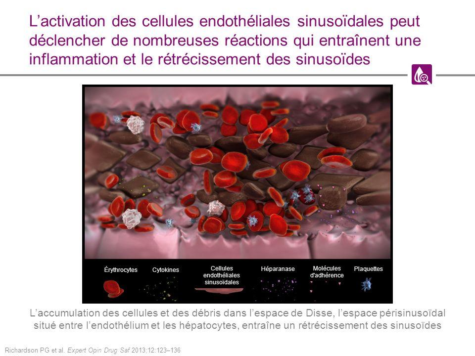 Cellules endothéliales sinusoïdales